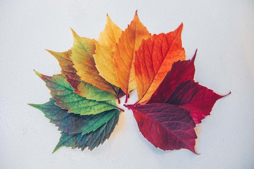 colorful leaves | blog post topics