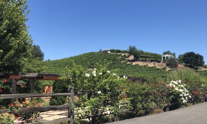 Beziner winery vineyards personal branding workshop